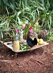 Offerings inspector (kimbar/Thanks for 4 million views!) Tags: puuomahukaheiau heiau waimea hawaii oahu offering chicken