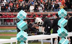 2014 #WorldSerieschampionship #ringceremony at #AtTPark on Saturday, April 18, 2015, in #SanFrancisco (Σταύρος) Tags: williemays georgekontos gigantes attpark ringceremony baseballstadium baseballteam baseballgame baseballfield baseball sanfrancisco nikond700 nikon d700 70300mm tiffanys worldchampions dynasty fieldclubseats fieldclubpremium premiumseats ceremony fieldclub estadio stadium sanfranciscogiants giants sfgiants wearesf wearegiant missionbay soma southofmarket southbeach livegame livebroadcast saturdaygame worldserieschampions worldseriesrings sfgring majorleaguechampions mlb majorleaguebaseball majorleague nationalleague sfgiantsgoldcollection goldcollection worldseries commemorativehat 59fifty fittedbaseballcap gold59fifty baseballplayers giantswon giantswin sf city sfist thecity санфранциско sãofrancisco saofrancisco サンフランシスコ 샌프란시스코 聖弗朗西斯科 سانفرانسيسكو