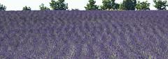 Provence et Lavande 03 (laurentconstantthierry) Tags: provence lavande valensole