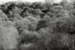 Warburg Reserve, Bix Bottom (FlickrDelusions) Tags: warburgnaturereserve bbowt oxfordshire blackandwhite aonb duotone trees bw chilterns naturereserve chilternhills henleyonthames england unitedkingdom gb