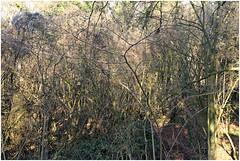 im korkus 283 (beauty of all things) Tags: eschweiler wald forest imkorkus gestrypp gestrüpp scrub wirrwarr tangle entropy dschungel jungle