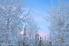 Ice Cream Day (Katy on the Tundra) Tags: icecream frost snow sunset winter