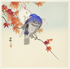 Two pigeons on autumn branch (1900 - 1936) by Ohara Koson (1877-1945). Original from The Rijksmuseum. Digitally enhanced by rawpixel. (Free Public Domain Illustrations by rawpixel) Tags: pdproject21batch2x otherkeywords tagcc0 animal antique art asian autumnbranch bird drawing illustration japan japanese koson museum name ohara oharakoson old paint pigeons rijksmuseum vintage