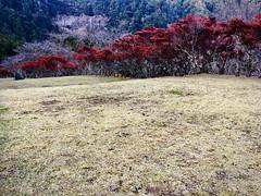 Hiryū Gongen's landscape garden (deziluzija) Tags: autumnleaves koyo kumanonachitaisha nachiwaterfall nachisan