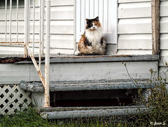 The fat cat (Jean S..) Tags: animal fat cat balcony stairs stairway house door