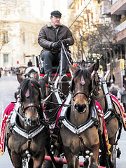 Tres Tombs de Barcelona 2019 (34) (Ismael March) Tags: barcelona trestombsdebarcelona trestombs santantoni sanantón