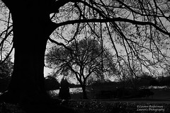 Winter is here... (lauren3838 photography) Tags: laurensphotography lauren3838photography landscape trees pa pennsylvania kennettsquare longwoodgardens longwood nikon d700 silhouette monochrome nature ilovenature gardens tamron tamron2875mm28