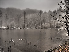 Misty winter mood at the pond (Ostseetroll) Tags: deu deutschland geo:lat=5403094042 geo:lon=1070739709 geotagged klingberg scharbeutz schleswigholstein teich pond nebel fog winter olympusem5markii