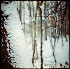 snow-coat III (Ulla M.) Tags: snow tree baum schnee balgenkamera falter foldingcamera folder adox adoxgolf adoxmessgolf film filmphotography freihand filmshooter filmisnotdead fuji 6x6 mediumformat messgolf mittelformat canoscan8800f selfdeveloped selbstentwickelt tetenalcolortec homedeveloped umphotoart analogphotography analogue analog vintagecamera