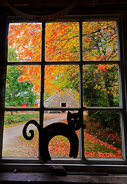 window florencecourt autumn colours leaves cat ornament house nationaltrust ireland fermanagh curves fall orange green cottage