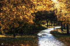 Silver and gold... (Kerriemeister) Tags: autumn autumnal walk path magical canopy trees colourful dreamlike nikond5300