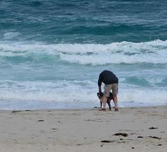 Dog time on the beach (afagen) Tags: california pacificgrove asilomarstatebeach montereypeninsula asilomar beach pacificocean ocean dog