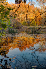 Autum Pond (acheron0) Tags: water autumn colors reflection fells middlesexfells