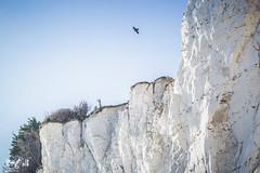 White cliffs near Dover (UK) (Renate van den Boom) Tags: 11november 2018 boom europa grootbrittannië jaar kent landschap maand natuur renatevandenboom rots stmargaretsbay