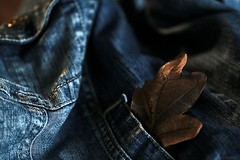 Autumn (eleni m) Tags: autumn november jacket jeans leaf brown dof light poem johnupdike bokeh blue shadows