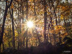 CONTRALUZ DE OTOÑO (faustoreinosa) Tags: cantabria olympus efectoseda cascada otoño arboles barcenillas agua omdem1markii ruente
