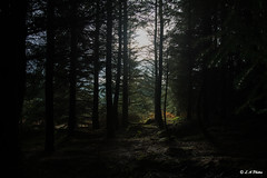 Shine a light. (Lee1885) Tags: trees sun light dark forest wales moelfamau leaves nature