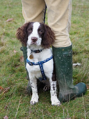 Boxing Day in the Park (Nanooki) Tags: chiddingfoldleconfieldandcowdrayhunt england petworth petworthpark sussex unitedkingdom dog spaniel rubber wellingtonboots man boxingdaymeet countrylife week13 moxey