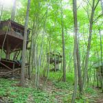 ツリーハウスの街による森林の保全の写真