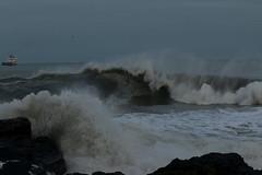 IMG_0608 (monika.carrie) Tags: monikacarrie wildlife scotland aberdeen waves