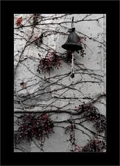 Raisins d'hiver (Jean-Louis DUMAS) Tags: cloche clochette fruit raisin frame hiver winter vigne bell grapes vine