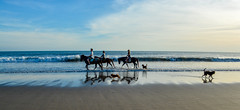 Legion Beach Horse Ride (philt22) Tags: bali dog horses indonesia legionbeach sand sea seminyak