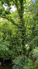 Arboleda del Parque Paxonal de Santiago. (Fotgrafo-robby25) Tags: acoruña españa galicia lugares nubes parqesyjardines parquepaxonal sonyalpha7riii sonyfe424105goss santiagodecompostela árbolesyarbustos
