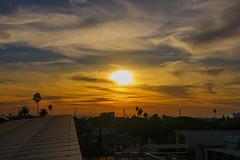 01 (morgan@morgangenser.com) Tags: sunset pretty beautiful red orange colorful evening dusk clouds blue palmtree santamonicacollege smc silhouette sun yellow cool