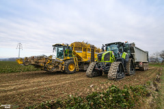 Sugar Beet Harvest | CLAAS // FLIEGL // ROPA (martin_king.photo) Tags: czechfieldpremiere czechpremiere czech field premiere tracs tractractor green red sky blue clouds bluesky powerfull martin king photo machines strong agricultural greatday great czechrepublic welovefarming agriculturalmachinery farm workday working modernagriculture landwirtschaft martinkingphoto moisson machine machinery huge big agriculture tschechische republik power dynastyphotography lukaskralphotocz day fans work place yellow sugarbeetunloading claasaxion930cmatic flieglgigantasw3101 flieglruby transfer conveyor sugar beet unloading by claas axion cmatic fliegl soucytrack tracks autumn cold sugarbeet ropa ropatiger ropatiger6 new