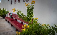 Happy Bench Monday (Jims_photos) Tags: rockporttexas texas unitedstates outdoor outside adobelightroom adobephotoshop shadows sunnyday daytime flowers happybenchmonday jimallen jimsphotos jimsphotoswimberleytexas lightroom benchmonday nopeople nikond750 memories