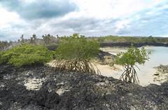 Inside the mangrove