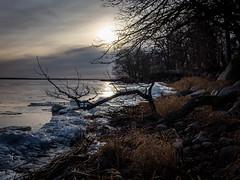P1120019.jpg (Mircada) Tags: landskap vinter strand roxen