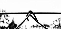 ... (a.penny) Tags: zaun fence fuji finepix fujifilm x10 apenny highkey explore minimal
