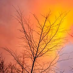 Winter sunset... (.: mike | MKvip Beauty :.) Tags: sony⍺7markii sony⍺7ii sonyilce7m2sonyalpha7m2 sonyalpha sony alpha emount ⍺7ii ilce7m2 fe canon fd nfd canonnfd135mmƒ2 vintagelens vintageprime primelens prime manuallens manual manualondigital manualfocusing manualexposure wideopen availablelight naturallight backlight backlighting sunset sunsetlight shallowdof bokeh bokehlicious beyondbokeh extremebokeh smoothbokeh nature winter wörthamrhein germany europe mth mkvip ngc npc