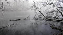 Nebel und Frost..... (petra.foto busy busy busy) Tags: winter januar natur fotopetra sony outside frost monocrom schwarzweis reinfeld schleswigholstein germany