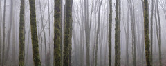 Foggy Forest Park Pano (kephart_kyle) Tags: 2019 foggy fog foliage forest hike january mist moss northwest nw oregon pacific park pnw portland rainforest winter