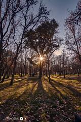 Tree (Daniprial) Tags: tree nikon nikonista d7200 nikond7200 park tokina tokina1116 1116 11mm pic light sun