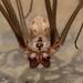 Cellar Spider's adventure :)