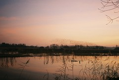 Murmurating, Olympus XA2 (knautia) Tags: k hamwall avalonmarshes somerset england uk rspbhamwall january 2019 birdsanctuary rspb starlings murmuration flock wheelingbirds birds naturereserve hamwallnaturereserve olympus xa2 fuji superia 400iso sunset