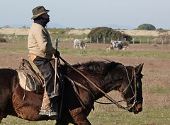 "Questa è ""Maremma"" - This is ""Maremma"" (Jambo Jambo) Tags: buttero cowboy vacche cows mandria herd parcoregionaledellamaremma parco park alberese grosseto maremma maremmacountryside maremmatoscana toscana tuscany italia italy cavallo horse jambojambo sonydscrx10m4 inverno winter"