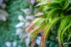 Bokeh Shot of Green Leaves in Focus