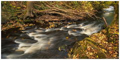 River Rivelin, Peak District(7) (S.R.Murphy) Tags: autumn fujifilmxf1024mm landscape leefilters manfrotto nov2018 rivelinvalley sheffield yorkshire autumncolours fujifilmxt2 nature river waterfall southyorkshire england longexposure riverrivelin lee06ndgrad leepolariser