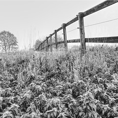 Fence (enneafive) Tags: fence pasture closure horses grass plants tree nature bucolic fujifilm xt2 affinityphoto nettles monochrome blackwhite