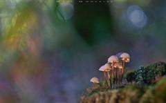 En grupo (www.studio360fotografia.es) Tags: helios442 setas valdeinfierno group grupo olympus omd em10 mushroom fungi colores colors fantasia fantasy bokeh desenfoque nature naturaleza musgo