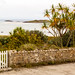 Front garden, The Scilly Isles, UK