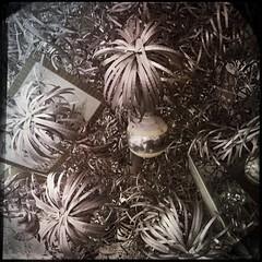 Vintage Christmas -14963 (Poetic Medium) Tags: square christmas hipstamatic possession vintage ipod