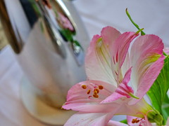Sweet Memories (peggyhr) Tags: peggyhr reflections peruvianlily pink dsc09993a pursuit carolinasfarmfriends teatime thelooklevel1red heartawards niceasitgets~level1 thelooklevel2yellow niceasitgets~level3 thelooklevel3orange level1peaceawards thelooklevel4purple 50faves dslrautofocuslevel1 thelooklevel5green