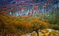 Just Magic ... (Julie Greg .. Holiday 13/12 - 31/12 2018) Tags: forest tree trees nature mountains colours canon