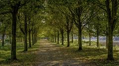 Au bout du chemin. (musette thierry) Tags: wavrin hautsdefrance france falowme automne autumn musette thierry d800 allée promenade nikon nikkor