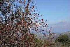 Ορεινή Αρκαδία Mountainous Arcadia (Eleanna Kounoupa) Tags: ελλάδα πελοπόννησοσ αρκαδία ανωδολιανά φύση βουνό φθινόπωρο greece peloponnese arkadia ano doliana nature mountain autumn